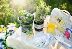 Domowy zielnik – jakie zioła warto hodować w domu?